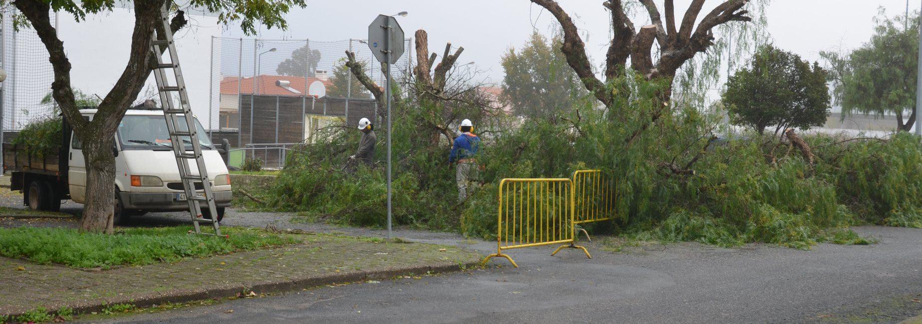 Câmara Municipal está a reabilitar as árvores da Vila